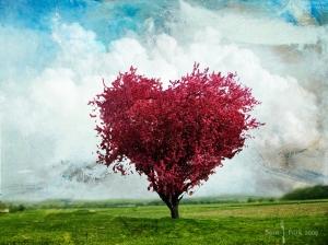 the_love_tree